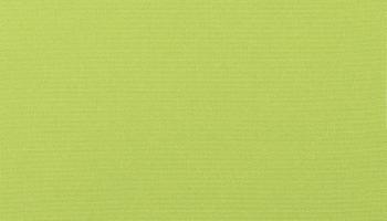 trex-5429-macaw
